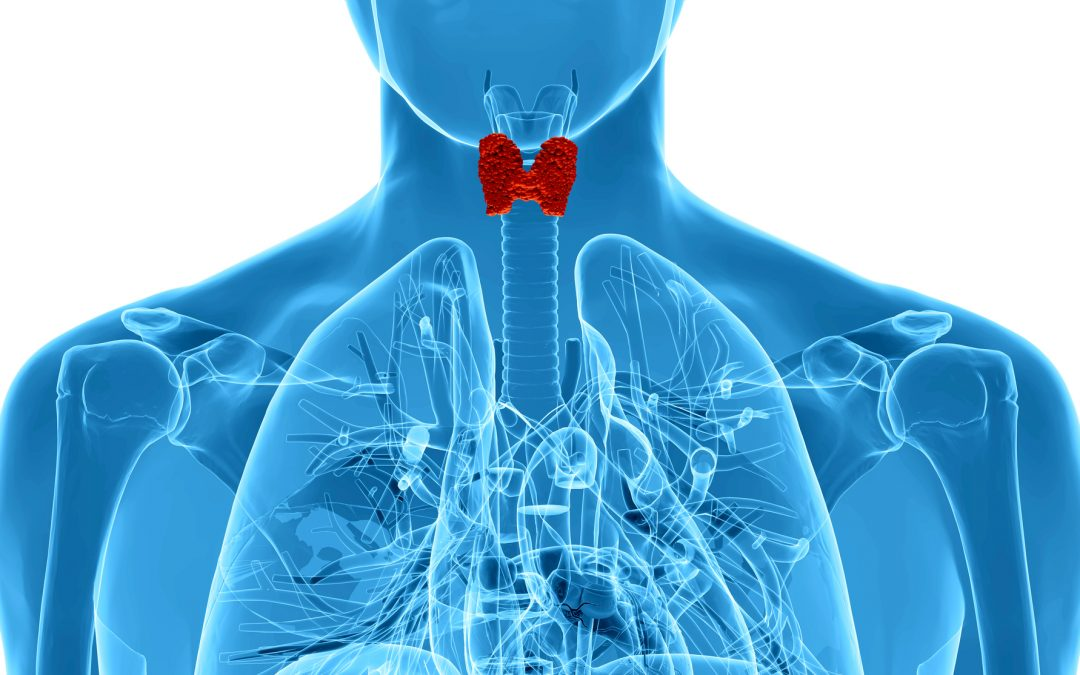 Top Reasons to Test Your Thyroid