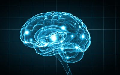 Top Nutrients for Brain Health